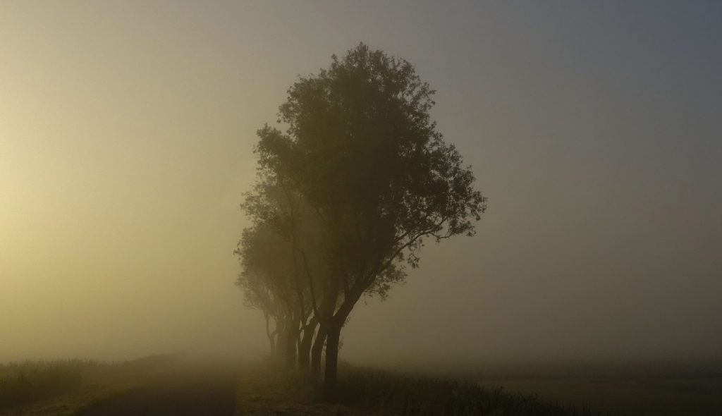 Morning mist two_01